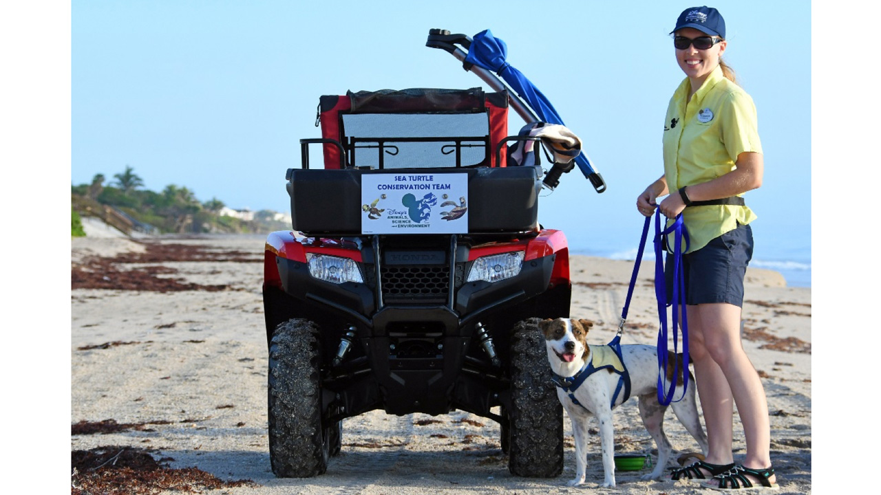 Rescued Dog Helping Us Reverse the Decline of Sea Turtles