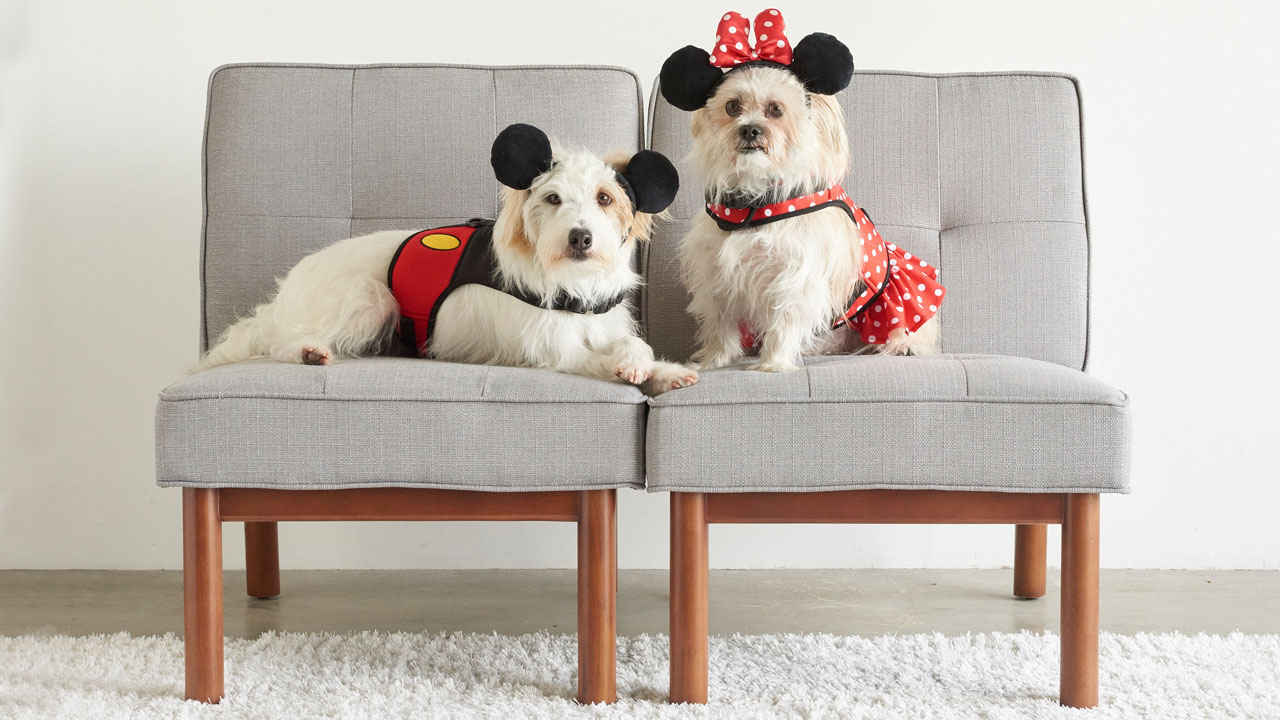 Fetch dog themed products from disney parks for national for Pet boarding near disney world