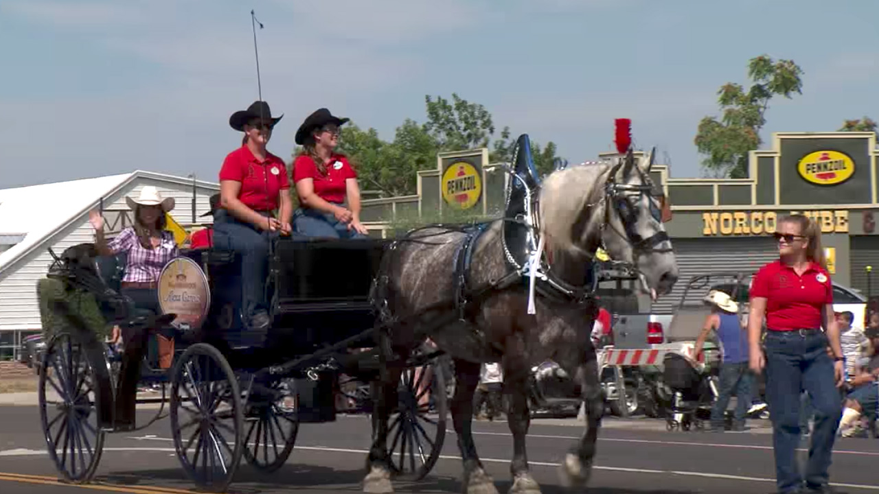 Disneyland Resort Horses Featured in Norco Labor Day Parade