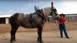 Disneyland Resort Horses