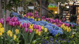 latest floral treatment - Downtown Disney District at Disneyland Resort