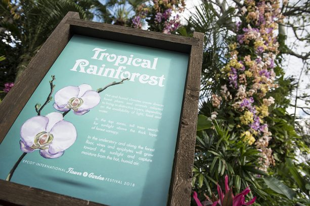 Tropical Rainforest Garden at Epcot International Flower & Garden Festival