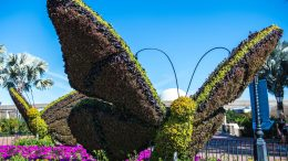 Butterfly topiary at the Epcot International Flower & Garden Festival