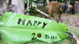 Animals Celebrate the 20th Anniversary of Disney's Animal Kingdom