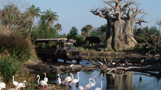 Kilimanjaro Safari Bus in action at Disney's Animal Kingdom
