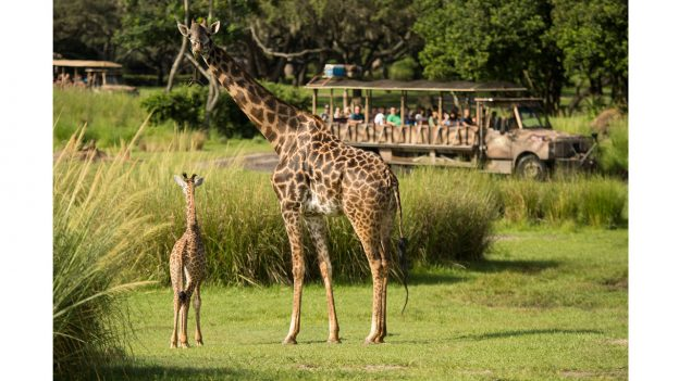 A new baby giraffe is here!