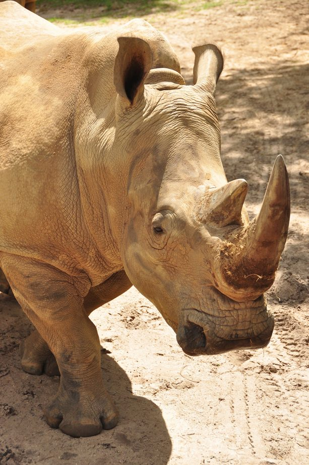 Wildlife Wednesday: Get 'Up Close with Rhinos' Starting Nov. 1