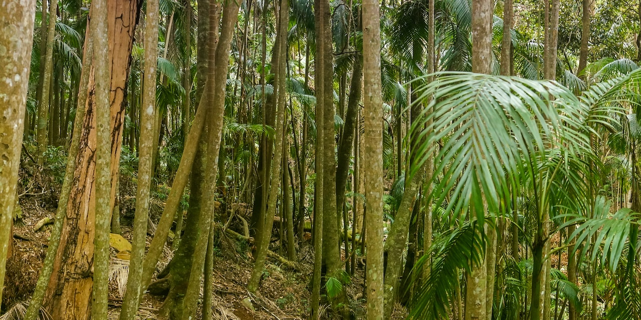 Palms and trees in a tropical rainforest