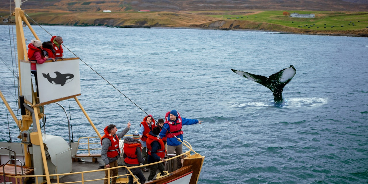 A group of people stand on the deck of a ship at sea watching a whale's tail break the water's surface