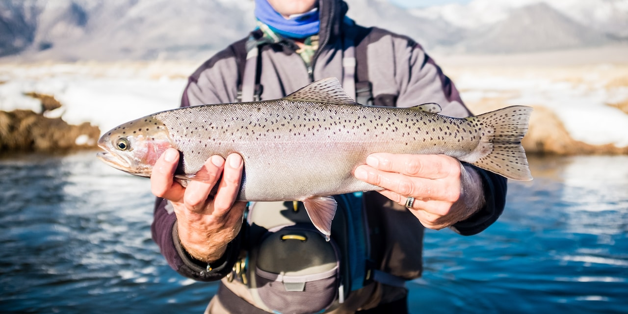 A man standing in a lake holds a large rainbow trout