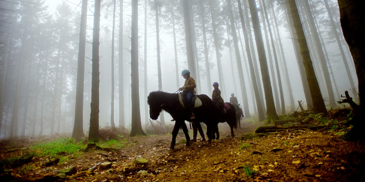 3 horseback riders in a foggy woods