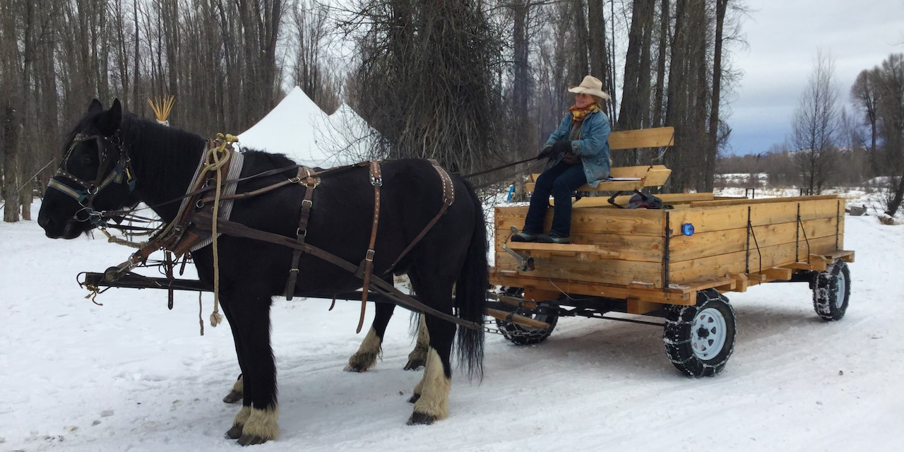 A sleigh drawn by 2 horses stands still on a snowy road with a driver holding the horses' reins
