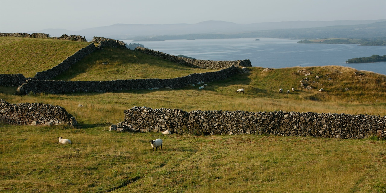 A flock of sheep stand near a stone wall in a pasture that overlooks the sea in Shannon, Ireland