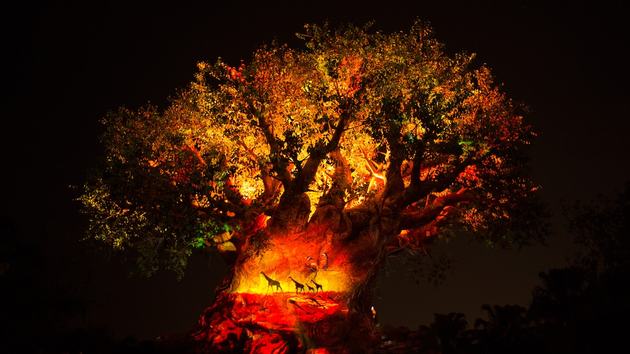Projection effects bring the iconic Tree of Life at Disney�s Animal Kingdom park to life at night