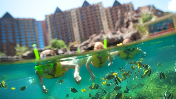 A family snorkels amongst the marine life at Aulani, A Disney Resort & Spa in Ko Olina