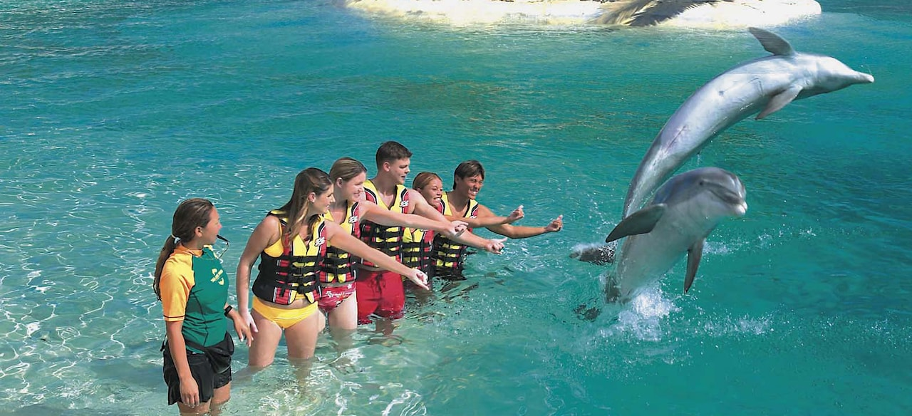 Two dolphins leap out of a lagoon as a group of people look on