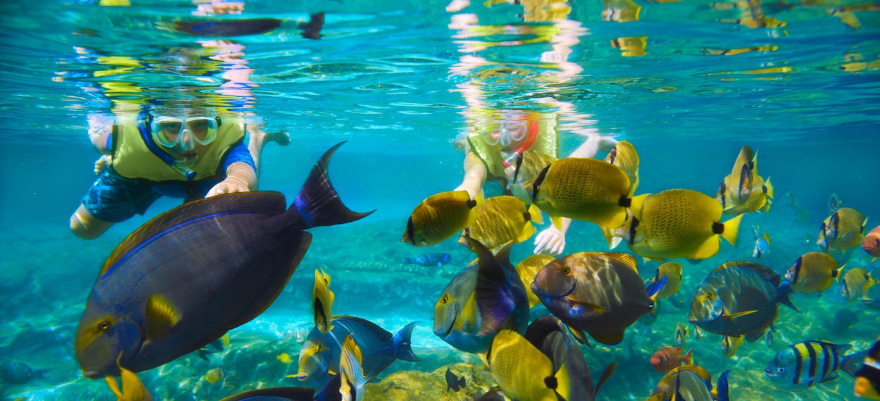 Guests snorkeling at Rainbow Reef, where PhotoPass Photographers capture underwater fun