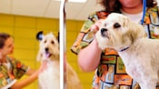 A white Maltese being groomed at Best Friends Pet Care