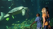 Young people watching large green sea turtle through aquarium glass