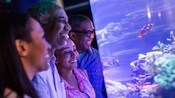 Two couples look at fish in an aquarium at SeaBase in The Seas with Nemo & Friends Pavilion