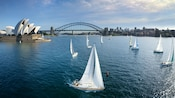 Boats sailing near the Sydney Opera House and Syney Harbour Bridge during Soarin' Around the World
