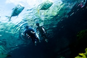 A father and son gaze underwater at 2 fish while they snorkel at Shark Reef