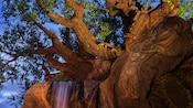 In Disney's Animal Kingdom park, a stream cascades over rocks beneath the Tree of Life which bears the carved likenesses of a chimp, owl, lizard and other animals