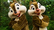 Chip 'n' Dale stand back-to-back with folded arms as they wait for Guests near Rafiki's Planet Watch