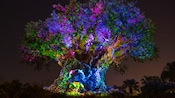 The Tree of Life at Disney's Animal Kingdom park awakening at night with vibrant lighting effects