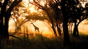Deux girafes paissent dans le soleil du matin au Disney'sAnimalKingdomLodge