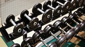 Rows of free weights at the Ship Shape Health Club at Disney's Beach Club Resort