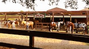 5 chevaux au Tri-Circle-D Ranch