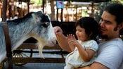 A young girl gets face-to-face with a goat at this Disneyland petting farm