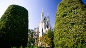 2 tall manicured bushes flank a view of Cinderella Castle
