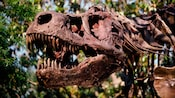 Profile of the skull of the T-rex named Dino-Sue