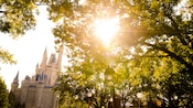 Sunlight shinning through tree branches with Cinderella Castle in the background