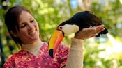 A bird trainer holds a toucan at the Flights of Wonder show