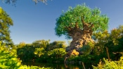 The Tree of Life under sunny clear blue skies