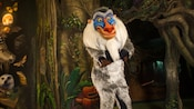 A smiling Rafiki with his arms crossed at Meet Rafiki at Rafiki's Planet Watch