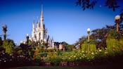View of a rose garden with Cinderella Castle in the background
