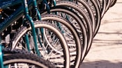 Close-up of a dozen blue bicycles stationed in bike stands