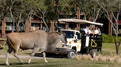 Excited Guests watching while a giant eland cross paths with their vehicle during the Wanyama Safari