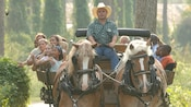 Over a dozen Guests look around in wonder while they enjoy a horse-drawn wagon ride amid the trees