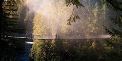 People cross a suspension bridge high in the treetops