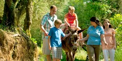 A boy rides a donkey led by an Adventure Guide while his mom, dad and brother walk along