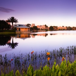 Blooming lilies at the shoreline across from Disney's Coronado Springs Resort