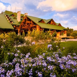 Purple flowers on the grounds outside Disney's Wilderness Lodge Resort