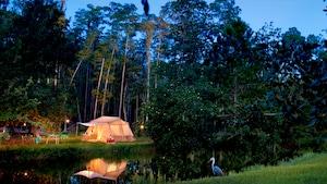 Entourée d'arbres, une tente au terrain de camping Fort Wilderness est illuminée sous les étoiles