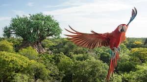 An exotic bird flying through the sky during Flights of Wonder at Disney's Animal Kingdom park