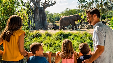 A mom, dad, daughter and sons gaze upon an African elephant during the Caring for Giants experience